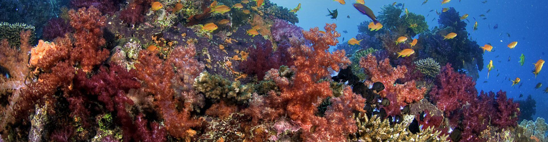 PT Reef
